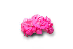 Getrennte rosafarbene Blume Stockbild