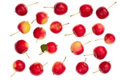 Getrennte rote Äpfel Stockfotografie