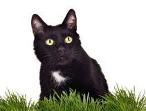 Getrennte schwarze green-eyed Katze im grünen Gras Lizenzfreie Stockbilder