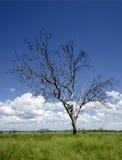 Getrennter Baum Lizenzfreies Stockbild