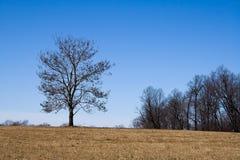 Getrennter Baum Lizenzfreie Stockfotografie