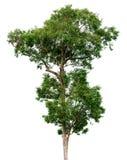 Getrennter Baum Stockfoto