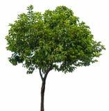 Getrennter Baum Stockfotos