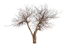 Getrennter Baum ohne Blätter Lizenzfreies Stockfoto
