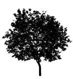 Getrennter Baum - Schablone Lizenzfreies Stockfoto