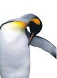 Getrennter Kaiser-Pinguin mit Ausschnittspfad Lizenzfreies Stockbild