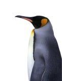 Getrennter Kaiser-Pinguin mit Ausschnittspfad Lizenzfreie Stockfotografie