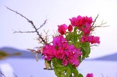 Getrennter rosafarbener Blumenstrauß Lizenzfreie Stockfotografie