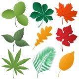 Getrenntes Bild von Blätter Stockfoto