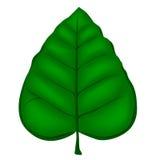 Getrenntes grünes Blatt Stockbild