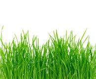 Getrenntes grünes Gras Stockfotografie