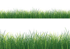 Getrenntes Gras Stockfotografie
