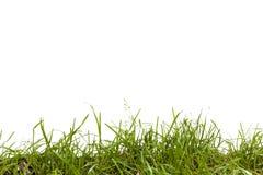 Getrenntes Gras Stockbild