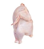Getrenntes Huhn mit Ausschnittspfad stockfoto