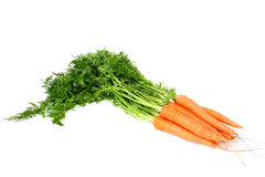 Getrenntes neues Bündel Karotten Lizenzfreie Stockfotos