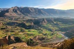 Getretene Terrassen in Colca-Schlucht in Peru Lizenzfreies Stockbild
