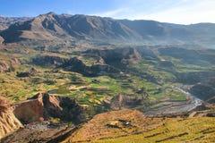 Getretene Terrassen in Colca-Schlucht in Peru Stockbilder