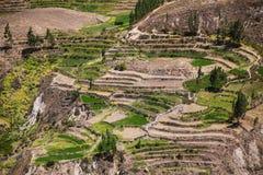 Getretene Terrassen in Colca-Schlucht in Peru Lizenzfreie Stockfotos