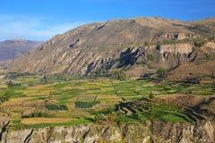 Getretene Terrassen in Colca-Schlucht in Peru Stockfotografie
