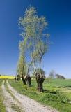 Getrimmte Baumlandschaft Lizenzfreie Stockbilder