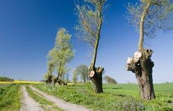 Getrimmte Baumlandschaft Lizenzfreie Stockfotografie