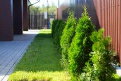 Getrimmter grüner Rasen lizenzfreies stockfoto