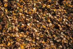 Getrocknet lässt Hintergrund im Herbst lizenzfreie stockfotos
