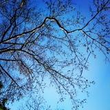 Getrocknet mit blauem Himmel Lizenzfreie Stockfotografie