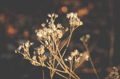 Getrocknete antike Blume mit rustikalem erdigem Hintergrund stockfoto