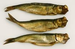 Getrocknete aringa Fische getrennt auf Weiß Stockbilder