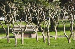 Getrocknete Bäume über dem Gras im Park stockbild