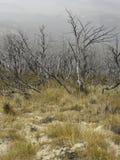 Getrocknete Bäume unter einem Feld des trockenen Grases Nebeliger alter Forest Scenery lizenzfreies stockfoto