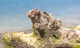 Getrocknete Baumwurzel auf dem Strand Stockbilder