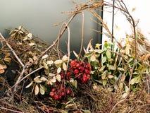 Getrocknete Beeren auf dem Fensterbrett Stockfotos