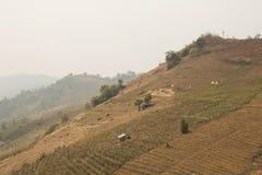 Getrocknete Berglandschaft lizenzfreies stockbild
