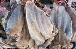 getrocknete Büffelleder- und -kuhhaut im Markt Stockfotografie