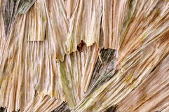 Getrocknete Blätter lizenzfreies stockbild