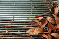 Getrocknete Blätter Lizenzfreie Stockbilder