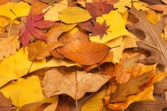 Getrocknete Blätter Stockfotos