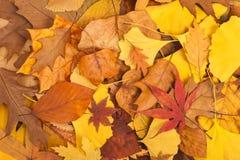 Getrocknete Blätter Stockbild