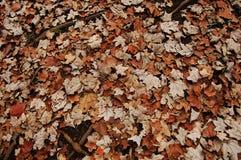 Getrocknete Blätter Lizenzfreie Stockfotos