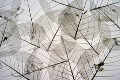 Getrocknete Blätter 5 Stockfotos