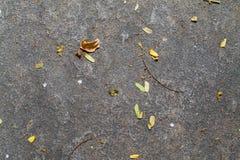 Getrocknete Blätter auf dem Felsen Lizenzfreie Stockfotos