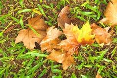 Getrocknete Blätter auf dem Gras Lizenzfreies Stockbild