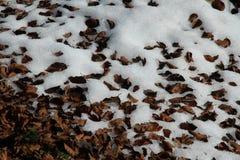 Getrocknete Blätter auf dem Schnee Lizenzfreie Stockfotografie