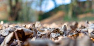 Getrocknete Blätter aus den Grund stockfotografie