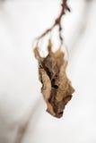 Getrocknete Blätter Blumen im Winter Lizenzfreies Stockfoto