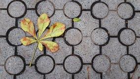 Getrocknete Blätter des Kastanienbaums gefallen auf Boden Fliesen mit geometrischem Kreismuster lizenzfreie stockfotos