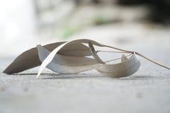 getrocknete Blätter, die fallen lizenzfreie stockbilder