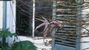 Getrocknete Blätter eines gruseligen Baums stock footage